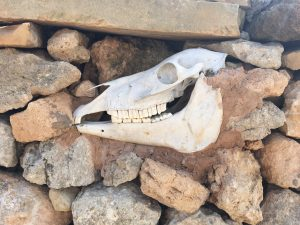 Dry stone wall with animal skull