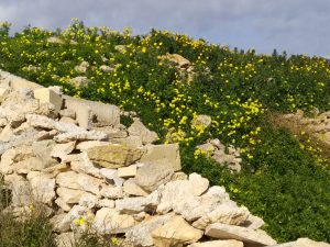 Stone walls and yellow flowers