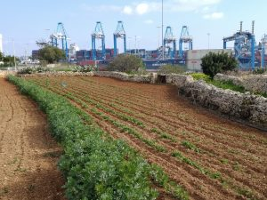 Farm land in South Malta