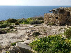 Coast South Malta